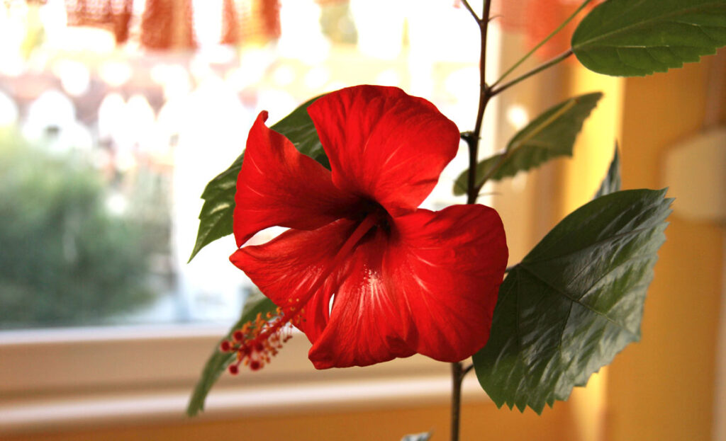 decorating-your-home-with-plants